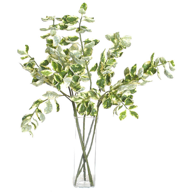 Euonymus Variegated Spray - New Growth Designs