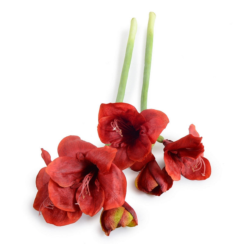 Amaryllis Stem - New Growth Designs