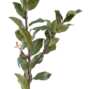 Laurel Leaf Spray