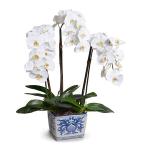 Phalaenopsis Orchid x3 in Ceramic Vase - White - New Growth Designs