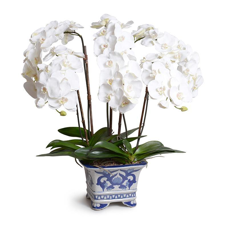 White Phalaenopsis in Blue & White Footed Vase