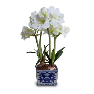 Amaryllis Arrangement - Blue and White Vase