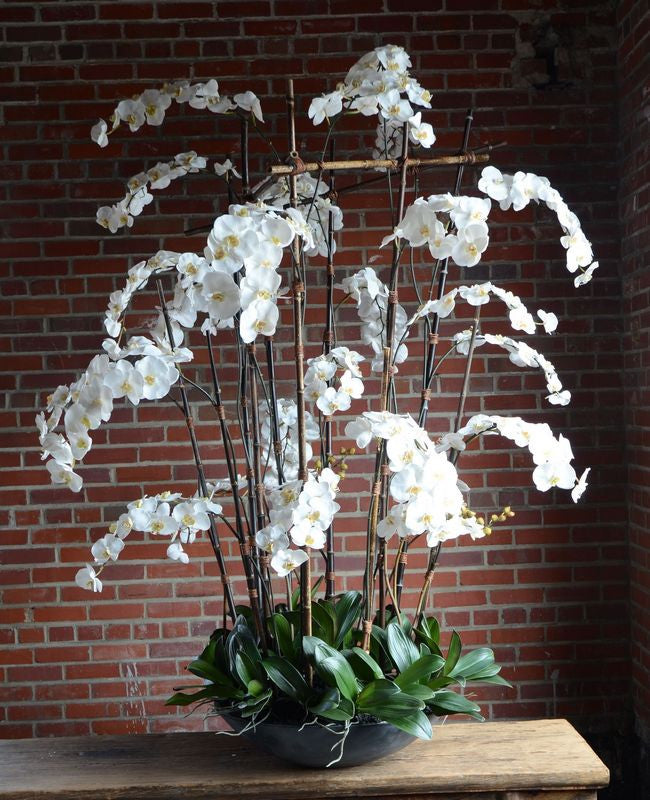 Phalaenopsis Orchid (Large) in Fiberglass Bowl