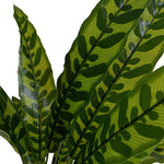 "Aglaonema Plant, 18"" - New Growth Designs"