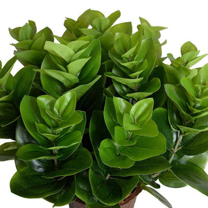 "Peperomia Plant, 16"" - New Growth Designs"