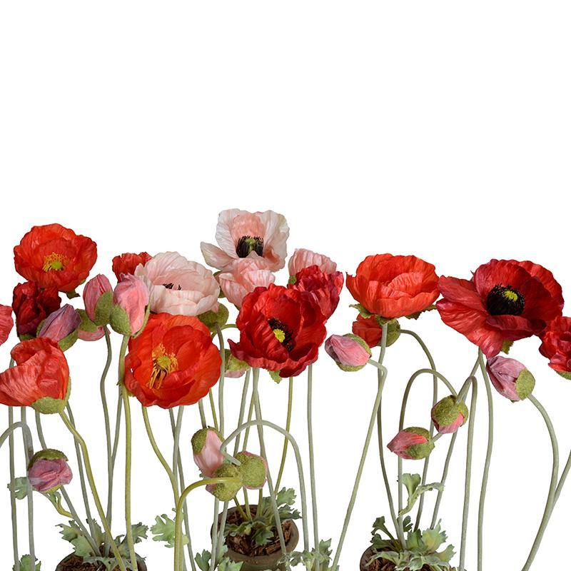Poppy in Terracotta - Pink - New Growth Designs