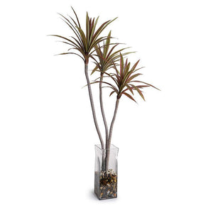 "Dracaena Marginata Branch in Glass Column, 52""H - New Growth Designs"