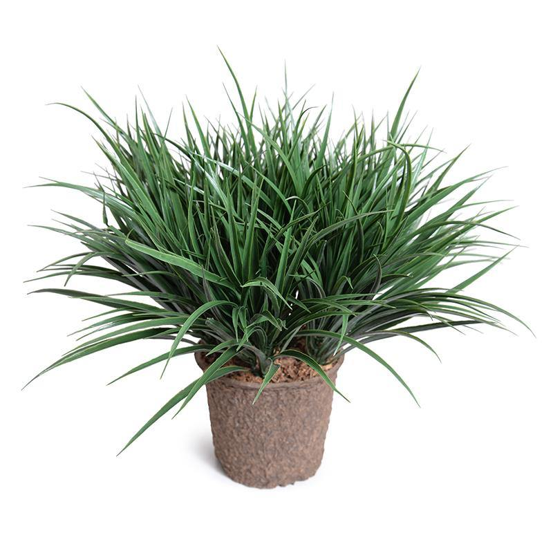 "Liriope Grass in 8"" Pot"