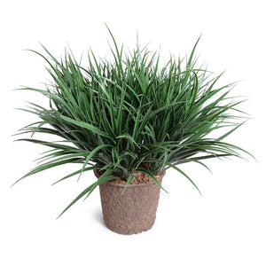 Liriope Grass - Green
