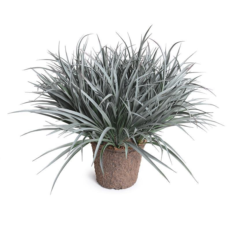 Liriope Grass - Gray Green