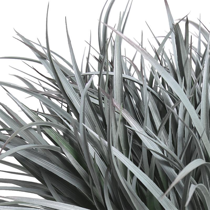 Liriope Grass - Gray Green - New Growth Designs