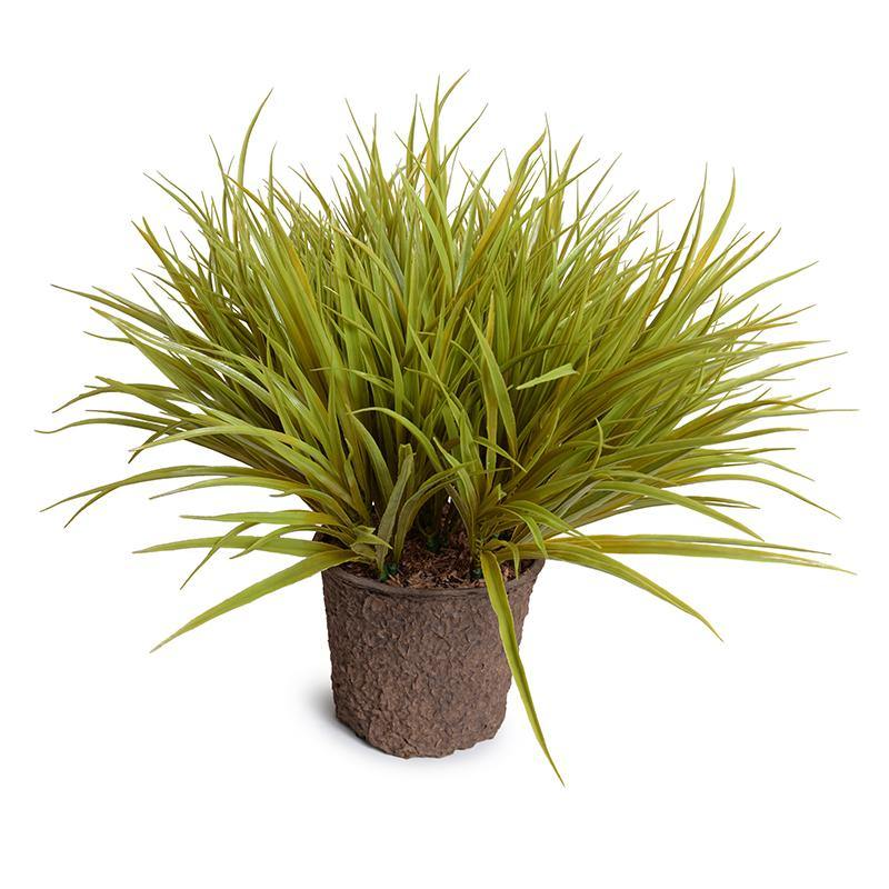 Liriope Grass - Yellow Green