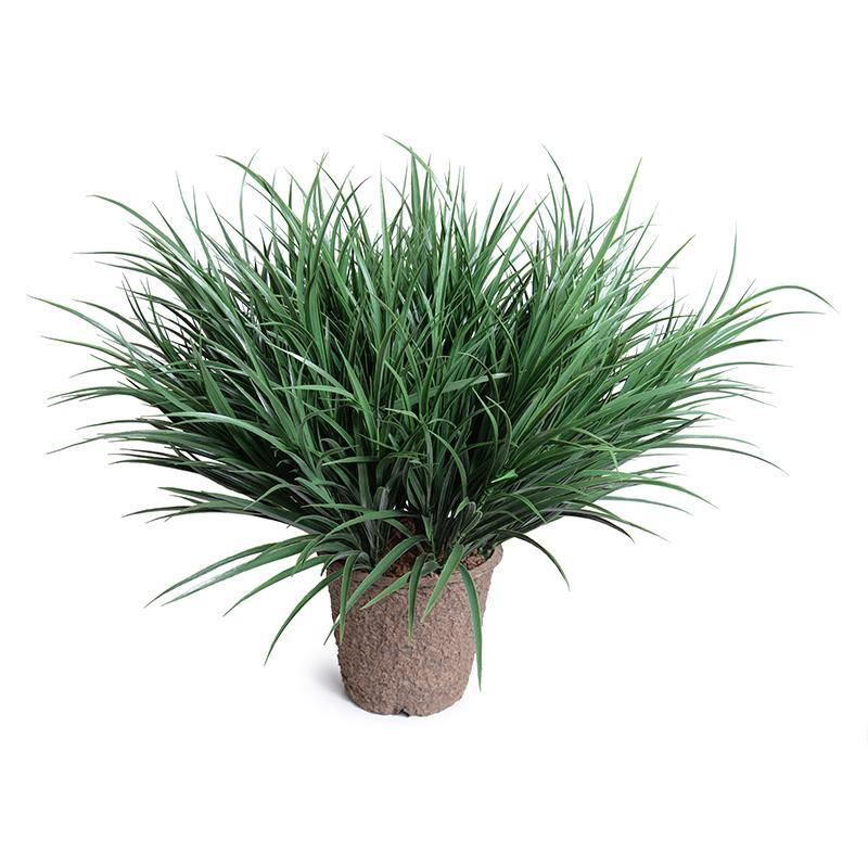 "Orchard Grass in 9"" Pot"