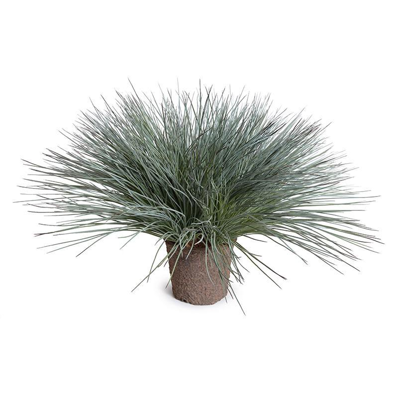 Onion Grass - Gray Green