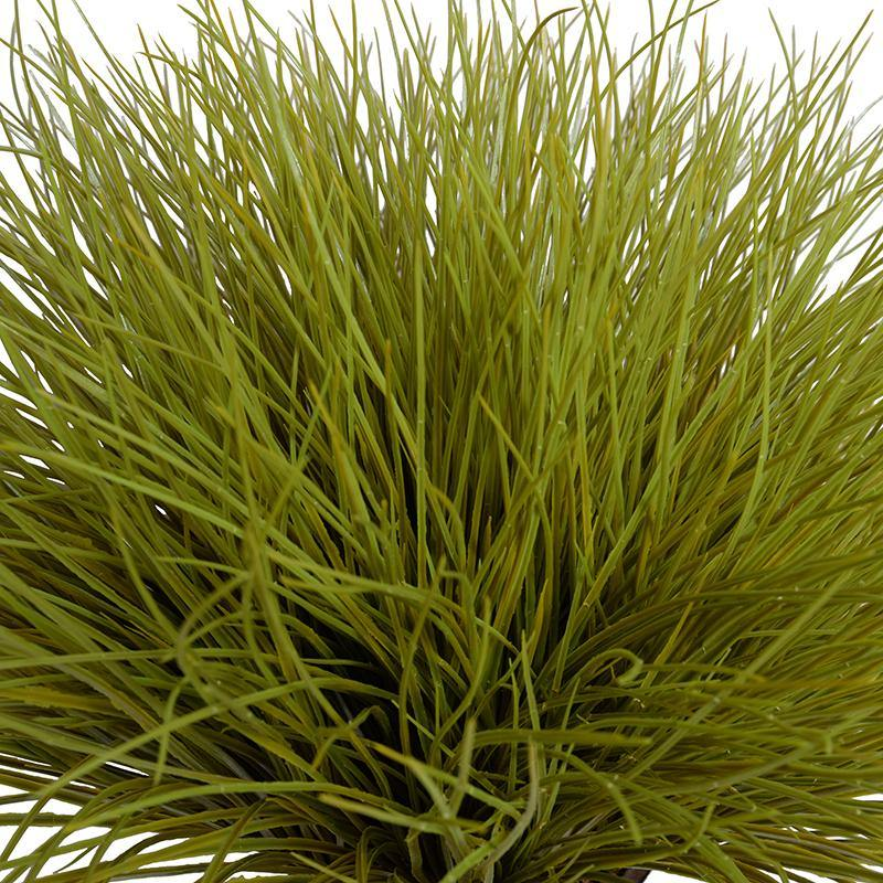 Onion Grass - Yellow Green