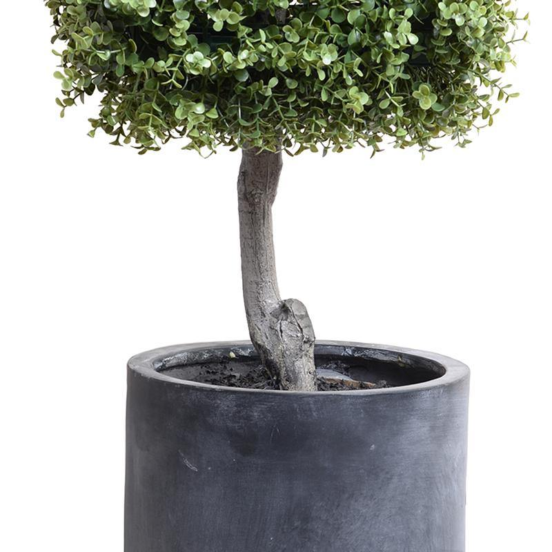 Boxwood Cube Topiary