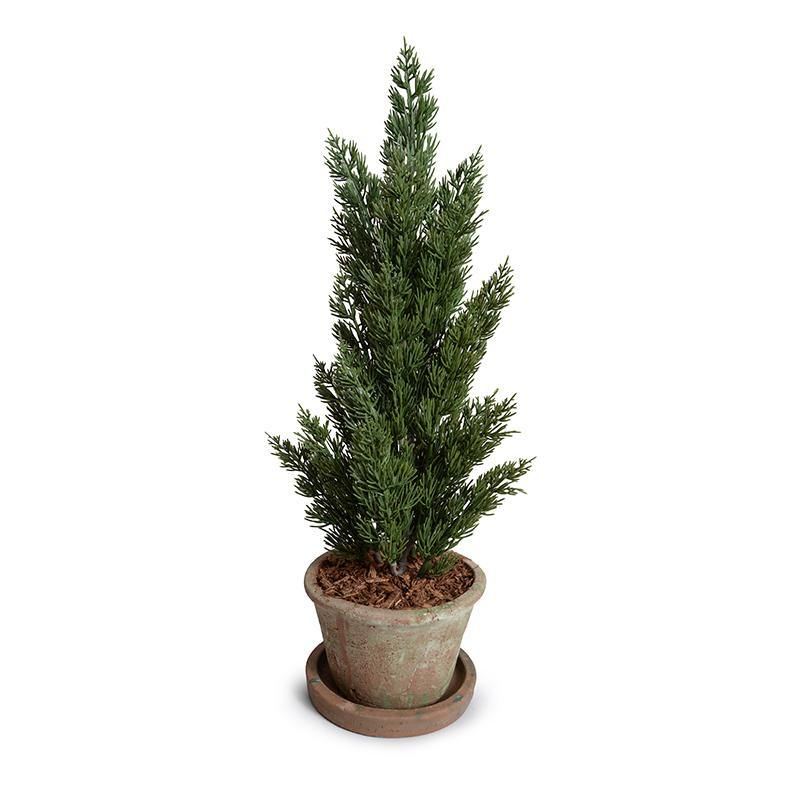 Cone-shaped Italian Cypress in Rustic Terracotta, 22""