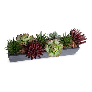Mixed Succulents in Fiberglass Planter