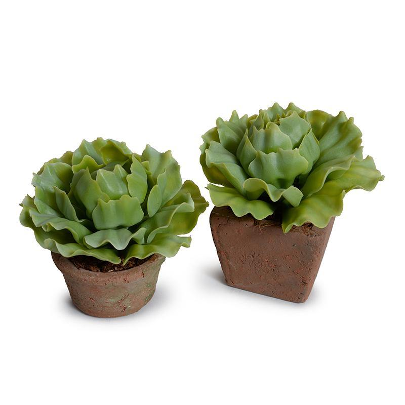 Cabbage Succulent in Rustic Terracotta Pot - Light Green - New Growth Designs