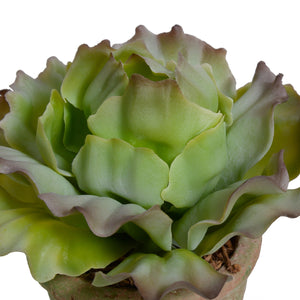 Cabbage Succulent in Rustic Terracotta Cube - Green Brown