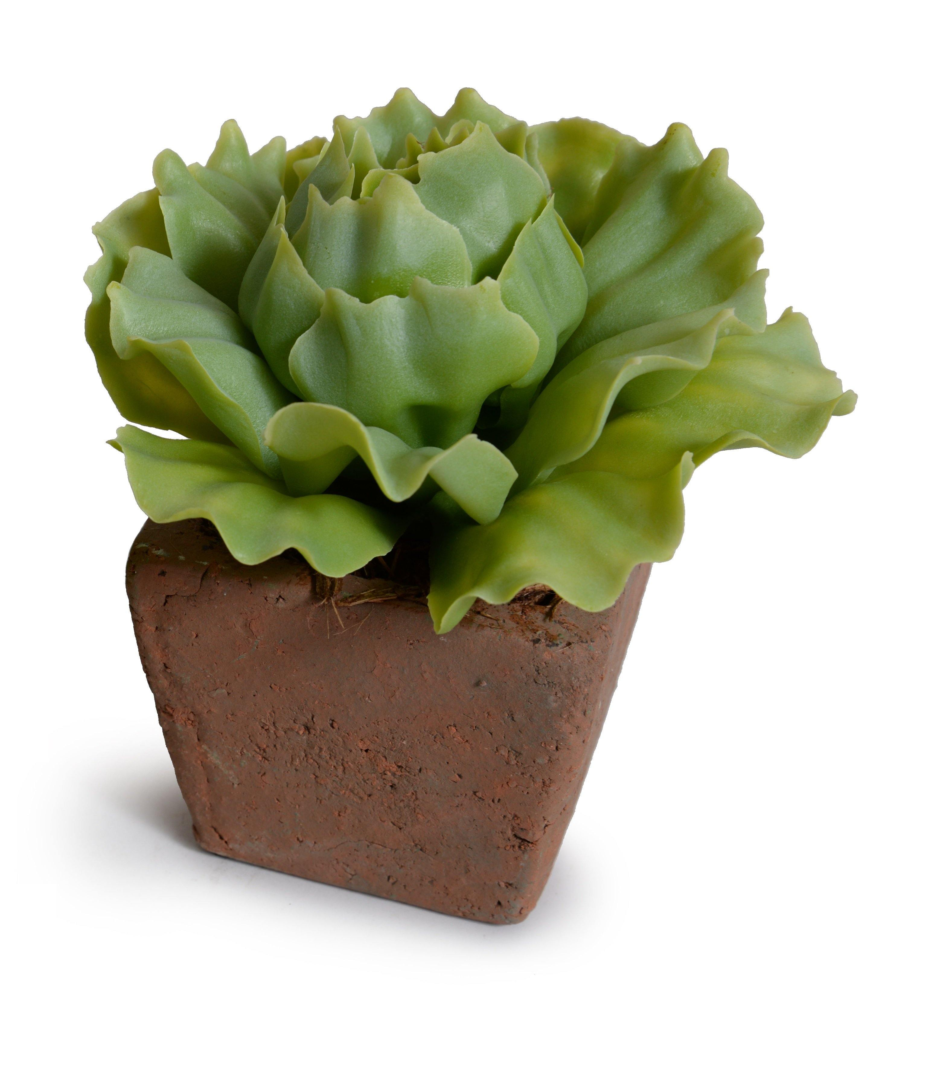 Cabbage Succulent in Rustic Terracotta Cube - Light Green