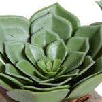 Echeveria Succulent in Rustic Terracotta - New Growth Designs