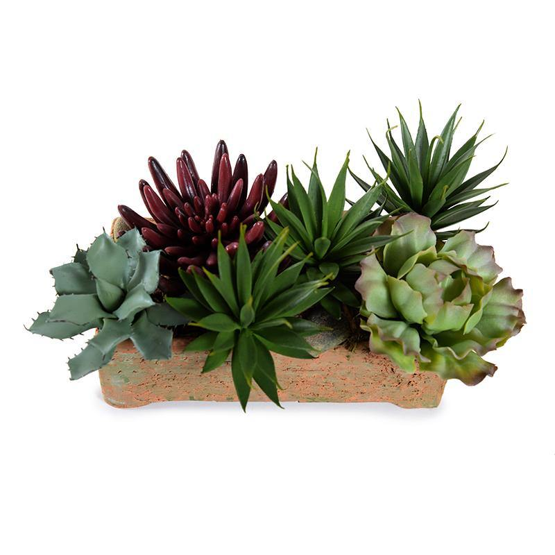 Mixed Succulents in Rustic Terracotta