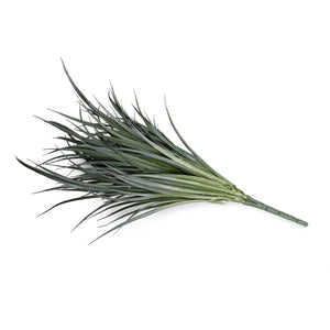"Grass Spray, 24"" L - Gray Orchard - New Growth Designs"