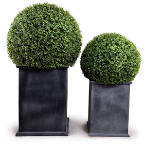 "22"" Boxwood Ball Topiary - New Growth Designs"