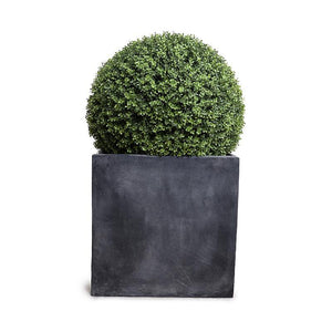 "28"" Boxwood Ball in Square Pot, 48""H"