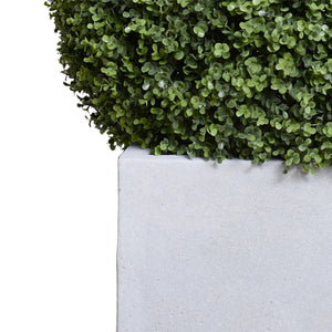 "28"" Boxwood Ball in Square Pot, 42""H - New Growth Designs"