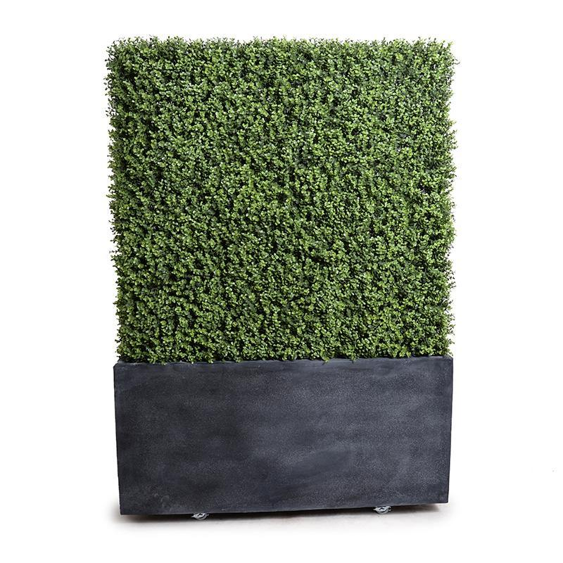 "42"" Boxwood Hedge with planter - New Growth Designs"