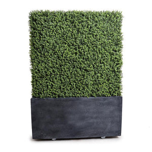 "42""L x 62""H Boxwood Hedge with planter - New Growth Designs"
