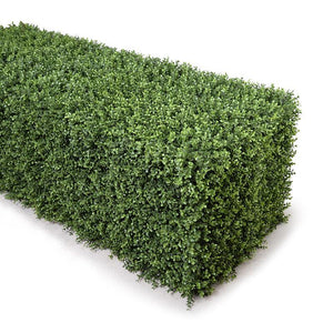 "62"" Boxwood Hedge (Extra Wide)"