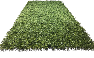 4'W x 8'H Boxwood Wall Panel (Roll)