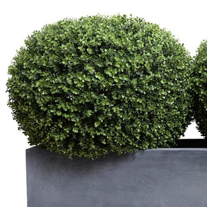 "Boxwood Shrub - ""Pumpkin"" - New Growth Designs"