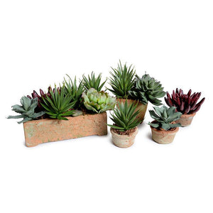 Echeveria Succulent in Rustic Terracotta