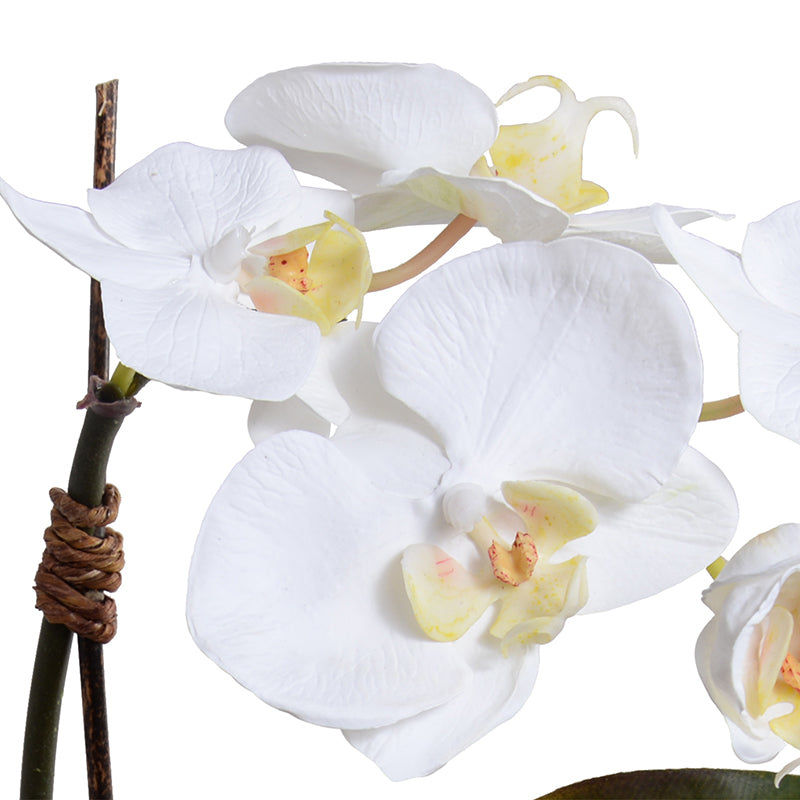 "Mini Phalaenopsis Orchid x1 in Egg Vase, 13""H - White"