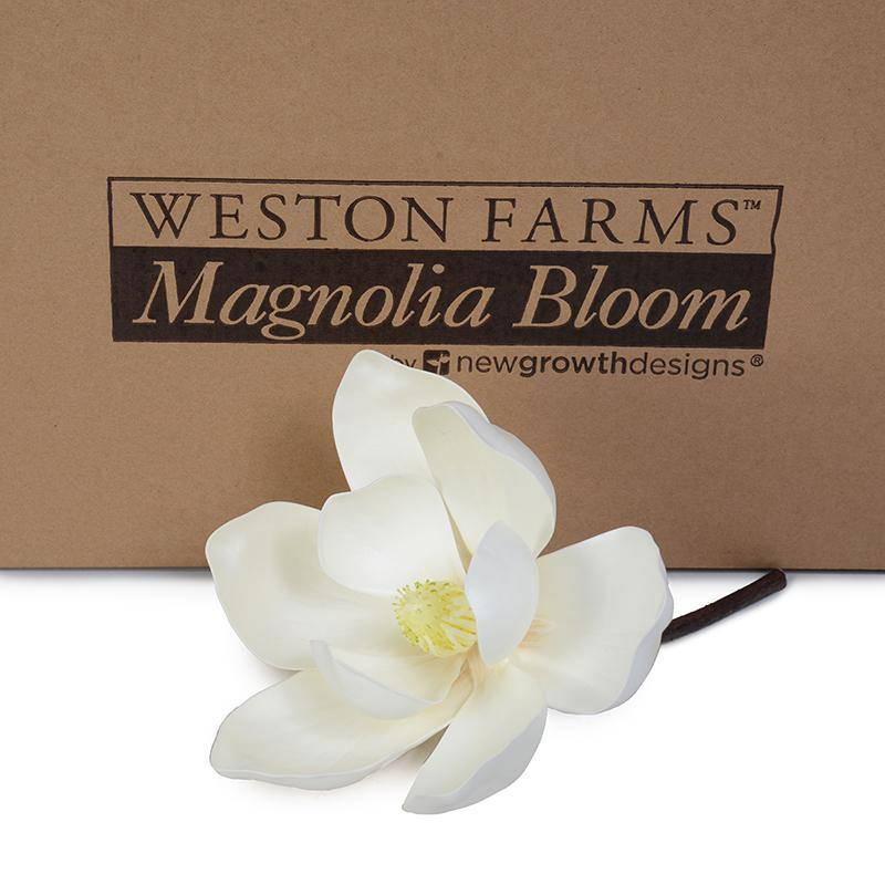 Large Weston Farms Magnolia Bloom