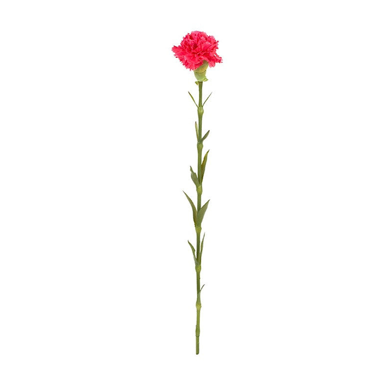 Carnation Stems - New Growth Designs