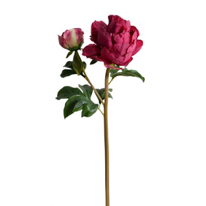 "Peony Stem with Bud & Leaves, 26"" - New Growth Designs"