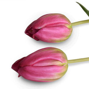 Tulip Stem, French - Burgundy-Green - New Growth Designs