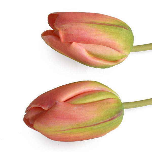Tulip Stem, French