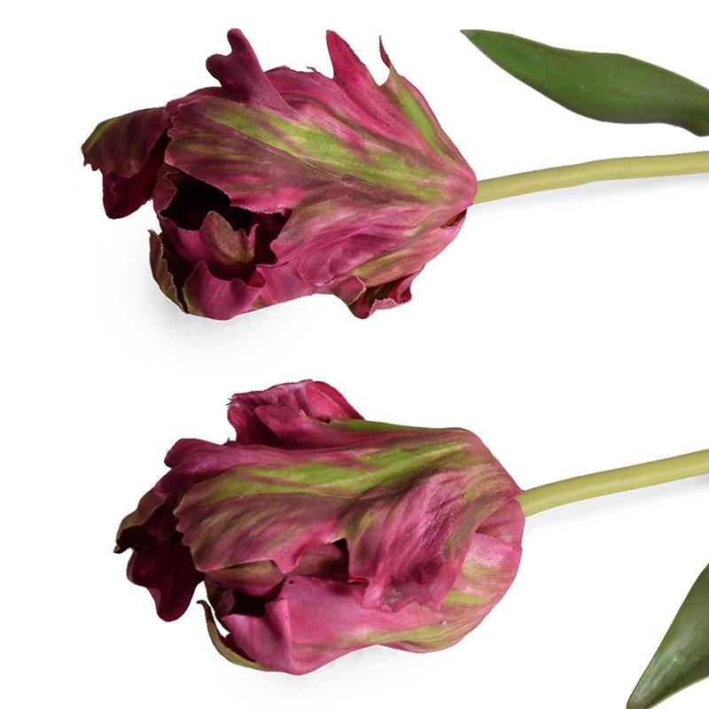 Tulip Stem, Parrot - New Growth Designs