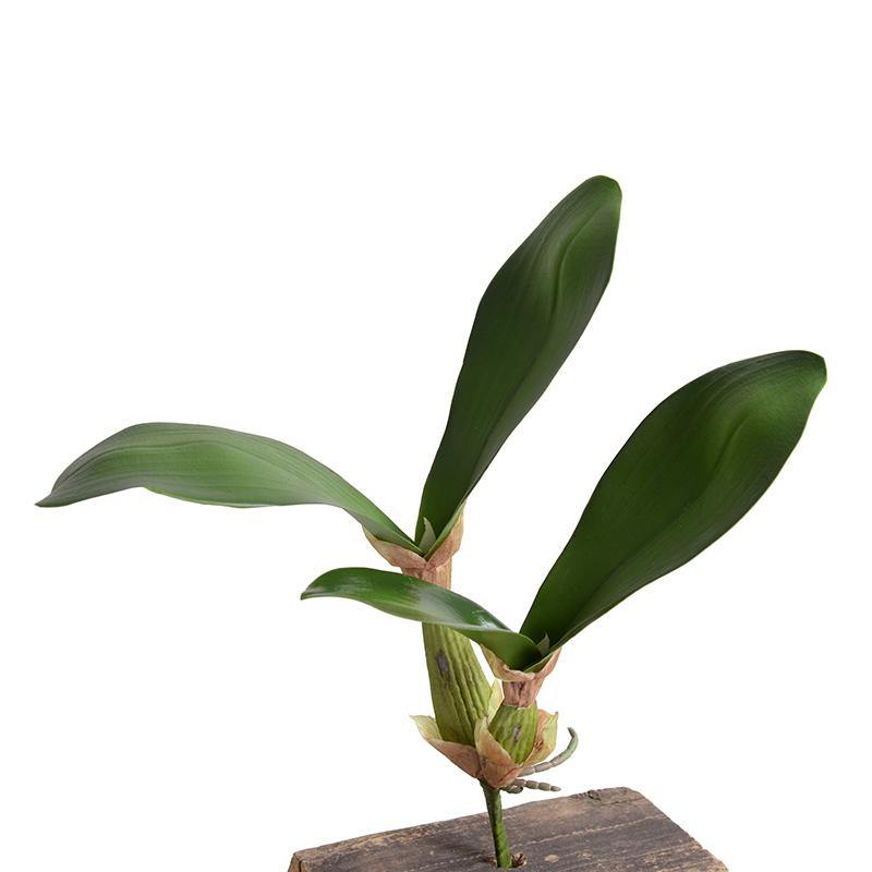 Orchid Leaf - New Growth Designs