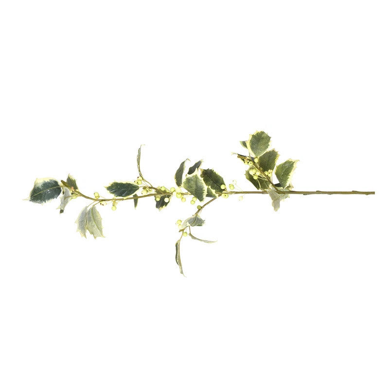 Holly spray, variegated - New Growth Designs