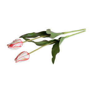 Tulip Stem, French - Red White - New Growth Designs