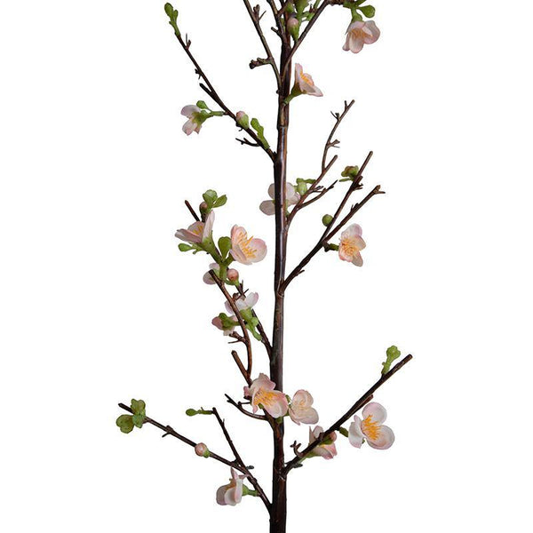 Quince Spray, Peach