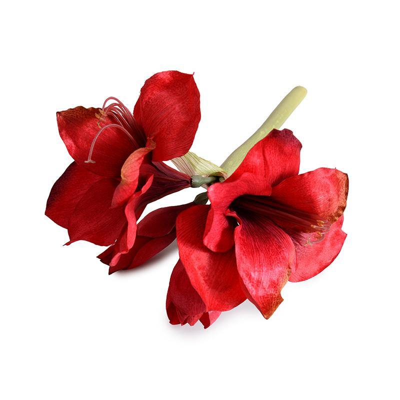 "Amaryllis Stem, 20"" - Red"