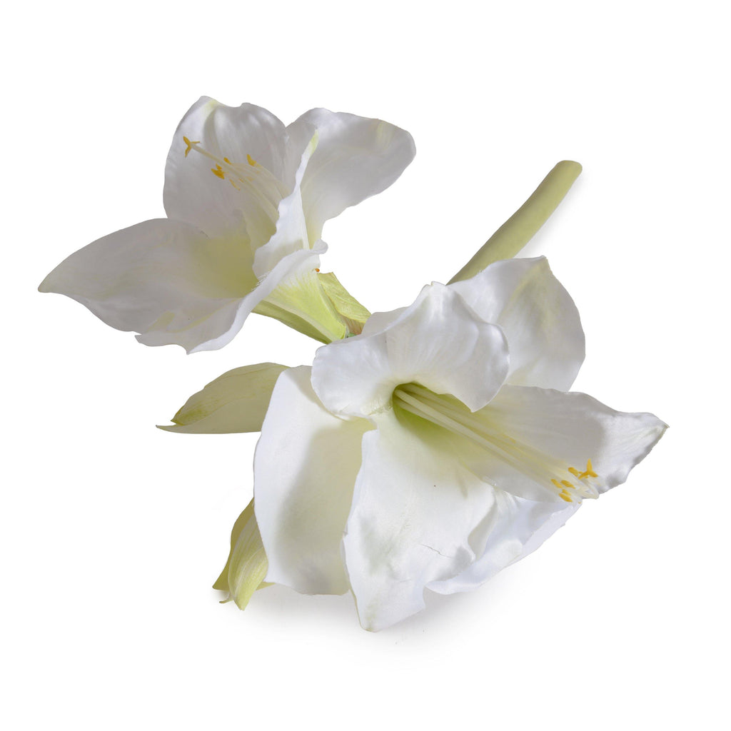 "Amaryllis Stem, 20"" L - White - New Growth Designs"